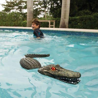 The Pool Guarding Gator 1