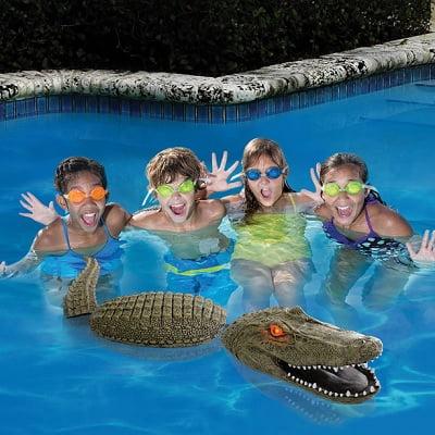 The Pool Guarding Gator