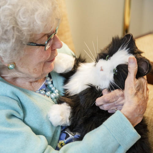 Lifelike Companion Cat1